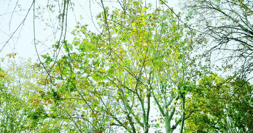 forest trees with green spring summer leaves at Footage