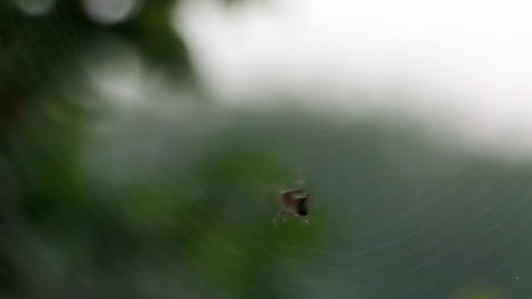 Spider weaves a web of Footage