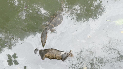 Cat dead in the canal 2 Live Action