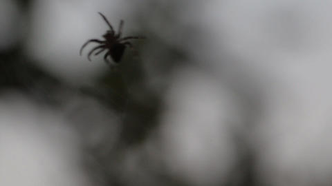 Spider weaves a web of 2 Footage