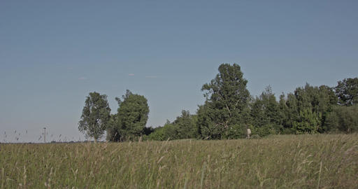 Grassy herbal meadow at the countryside with trees in the background and a cloud Footage