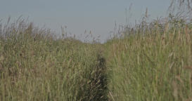 A path through a grassy herbal meadow at the countryside with high grass plants Footage