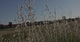 A slow motion shot through blades of grass on a meadow with trees and a village  Live Action