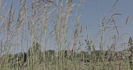 A slow motion shot through blades of grass on a meadow with trees in the backgro Live Action