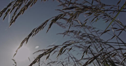 A slow motion shot through blades of grass on a meadow with the sun in the backg Live Action
