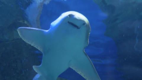 Sharks swim in a large aquarium 013 Live Action
