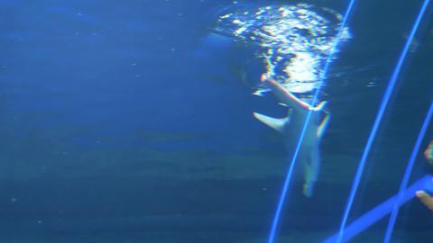 Sharks swim in a large aquarium 002 Live Action