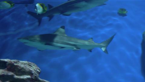 Sharks swim in a large aquarium 004 Live Action
