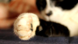 Cat show his claws Footage