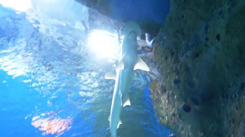 Sea fish swim in a large aquarium 002 Live Action