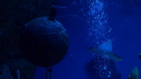 Sea fish swim in a large aquarium 003 Live Action