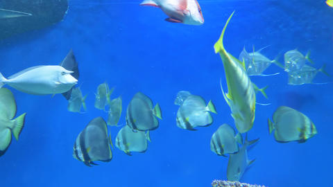 Sea fish swim in a large aquarium 005 Live Action