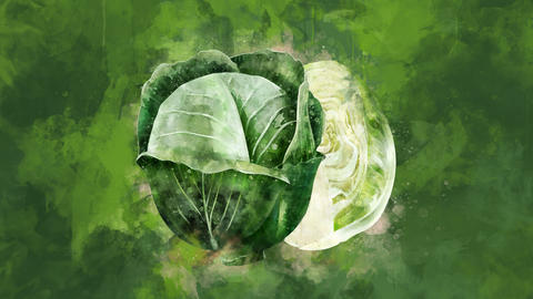 The appearance of the cabbage on a watercolor background Animation