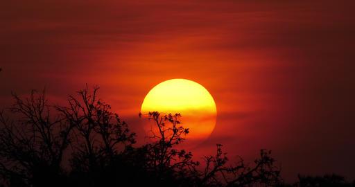 Sunset on Savannah, Masai Mara Park in Kenya, Real Time 4K Live Action
