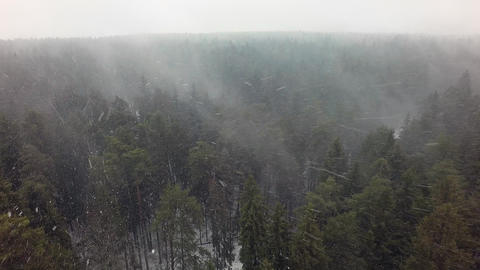 Snow over a coniferous forest Footage