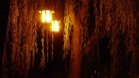 willow tree & street lights at quiet night Stock Video Footage