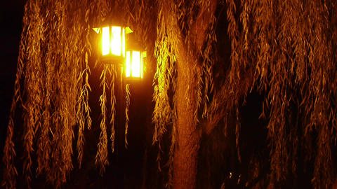 willow tree & street lights at quiet night Footage