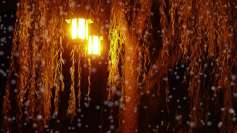 willow tree & street lights at quiet night in winter... Stock Video Footage