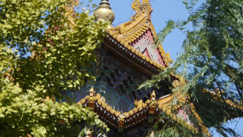 Roof Of Forbidden City Palace.Crown Of Ginkgo Tree & Willow.Ancient City Gre stock footage