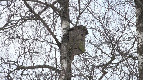 Birdhouse on a tree Stock Video Footage