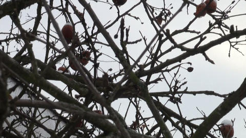Frozen apples Stock Video Footage