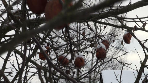 Frozen apples Stock Video Footage