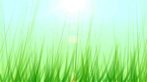 BG GRASS 001 24fps Stock Video Footage