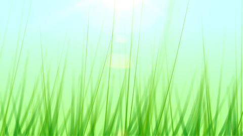 BG GRASS 001 24fps Animation