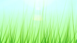 BG GRASS 001 24fps Stock Video Footage