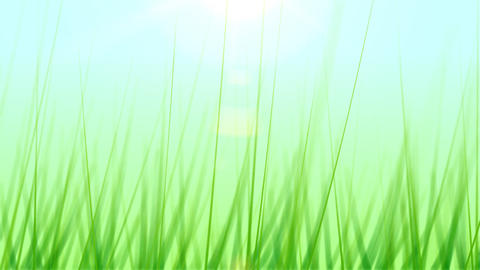 BG GRASS 001 30fps Animation