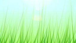 BG GRASS 001 30fps Stock Video Footage