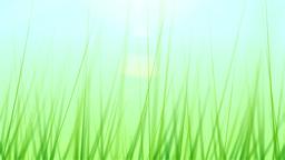 BG GRASS 001 30fps Stock Video Footage