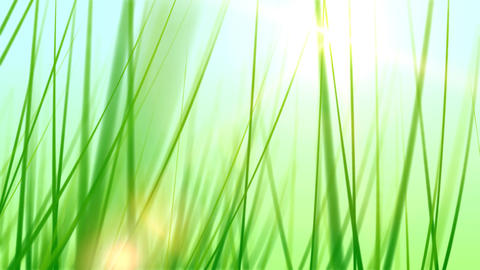 BG GRASS 002 25fps Stock Video Footage