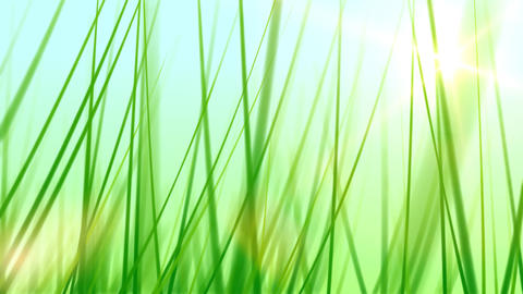 BG GRASS 002 25fps Animation