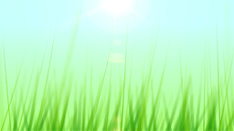 BG GRASS 003 24fps Stock Video Footage
