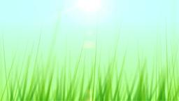 BG GRASS 003 24fps Stock Video Footage