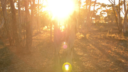 Sunrise in some Australian Bush Stock Video Footage