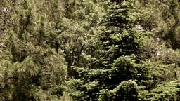 Trees Stock Video Footage