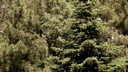 Trees Footage