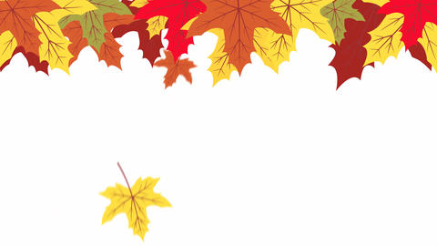 Autumn maple leaves with falling animation design element After Effects Template