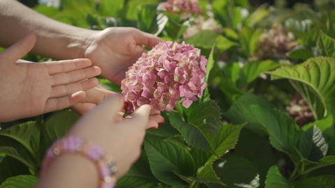 Close-up hands of mother and her daughter care for the garden touching pink Live Action