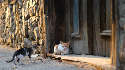Stray cats playing on the street in front of old, abandoned house door Live Action