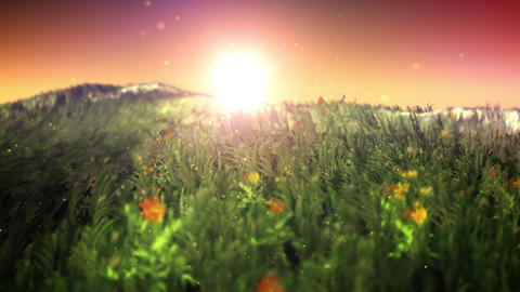 Sunset on magic grass field loop Animation