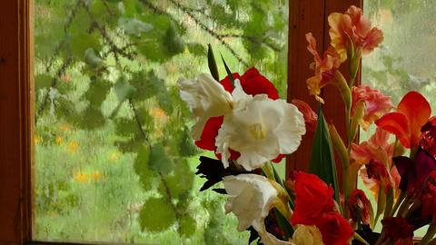 Bouquet of multi-colored gladioli Footage