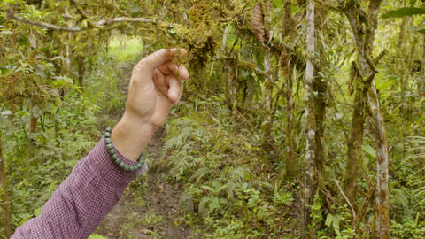 Biology Teacher With His Student Taking A Sample Of A Plant In The Forest Live Action