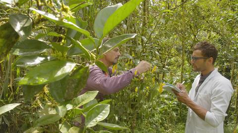 Botany Teacher Teaching His Student In Ecuador Live Action