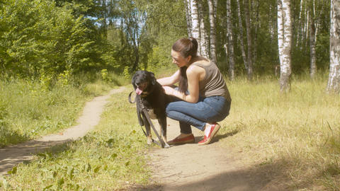 Woman volunteer caress the dog Live Action