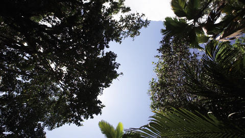Tropical forest, palm trees in sunlight Footage