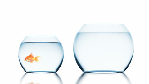 Goldfish Improves Living Conditions Jumping into a Bigger Fishbowl Animation