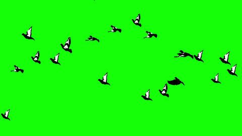 Flock of pigeons flying against green background. 4k Animation